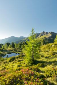 Blick vom Hirschbichl ins Defereggental, Kahorn (2692m), Hohe Tauern, Osttirol, Tirol, Österreich