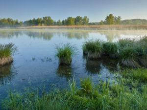 Danube meadows, Lower Austria, Austria