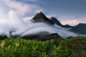 Berg Cimandef vom Col des Boeufs, Reunion,