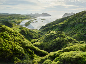Coast near Wharariki Beach, Tasman, South Island, New Zealand, Oceania