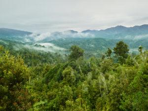 Oparara Basin, Kahurangi Nationalpark, West Coast, Südinsel, Neuseeland, Ozeanien