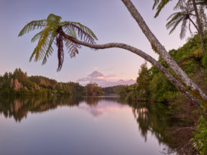Tree Fern, Lake Mangamahoe, Mount Taranaki, North Island, New Zealand, Oceania