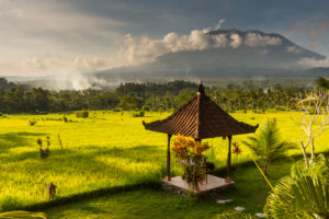 Garden with pavilion and rice field of the Great Mountain Views Resort with the volcano Gunung Agung