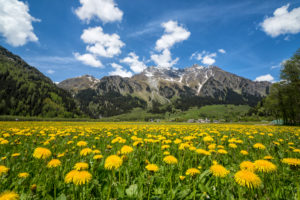 Spring flowering and green meadows Casaccia Bregaglia Valley Canton of Graubünden Engadine Switzerland Europe