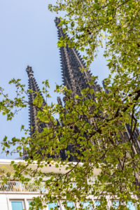 The two peaks of Cologne Cathedral in spring, behind a tree with just opened leaves