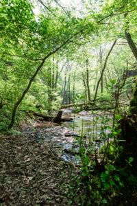 Der Ehrbach schlängelt sich durch den Wald