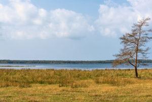 Meeresbucht in Schweden im Vordergrund Wiese auf der ein einsamer Baum steht