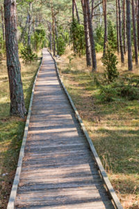 A straight wooden plank path leads through a pine forest.
