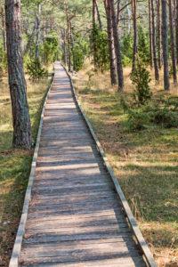 Ein schnurgerader Holzbohlenweg führt duch einen Kiefernwald.