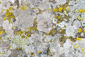 Moose und Flechten auf Stein, Smaland, Schweden