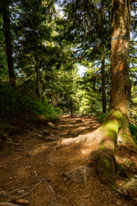 Forest path on the Belchensteig connoisseur path.