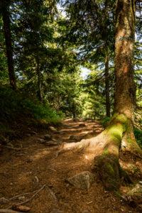Waldpfad auf dem Genießerpfad Belchensteig.