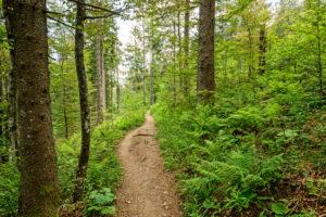 Wegeführung des Belchensteiges durch den Wald.
