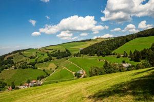 Aussicht vom Belchensteig auf landwirtschaftliche Nutzflächen, beim Neuhoflift, im Schwarzwald