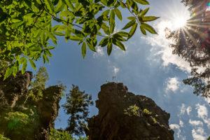 Blick gen Himmel mit Gegenlicht, Blätter, Battertfelsen, Sonnenstern