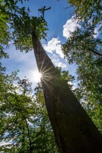 Blick gen Himmel am Baumstamm entlang, Sonnenstern