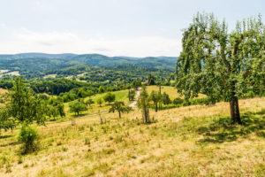 Panoramablick über Streuobstwiesen