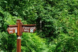 Wegweiser vor grünem Hintergrund
