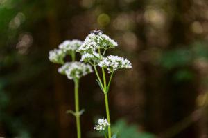 Insekt sitzt auf weißer Blüte