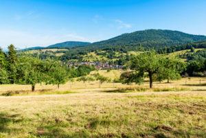 Schwarzwaldhügel mit Ortschaft, im Vordergrund eine Streuobstwiese