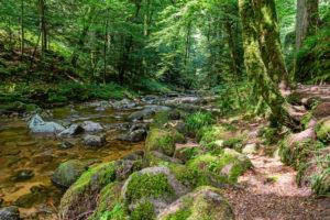 Der Grobbach mit Wanderpfad, Bäumen und moosbewachsenen Steinen.