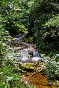Grobbach fließt durch den Wald.
