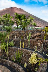 Cactus garden in Lanzarote, Canary Islands, Spain