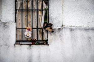Dog and window in Spain