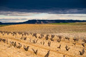 Landschaft von Weinbergen am Ende des Winters in der Region von Ribera del Duero-Weinen in der Provinz von Valladolid in Spanien Europa
