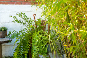 fern in a detail of a Mediterranean style garden in Barcelona in the first days of spring