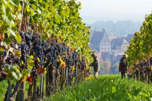 Germany, Baden-Württemberg, Besigheim, vintage