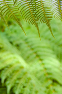 Fern, green, detail, leaf