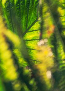 Pflanze, Colocasia, Detail, Unschärfe