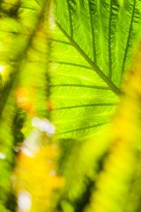 Pflanzen, Colocasia, grün, Blatt, Struktur
