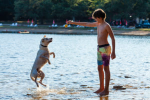 Junge, Kind, Hund, Meer, spielen, springen