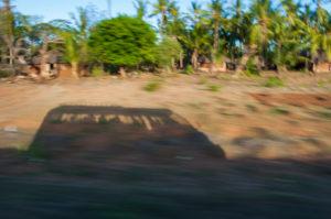 Bus, fahren, Landschaft, Palmen, Reise