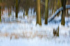 Winter, Wald, Schnee, abstrakt, Unschärfe