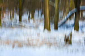 Winter, forest, snow, abstract, blur