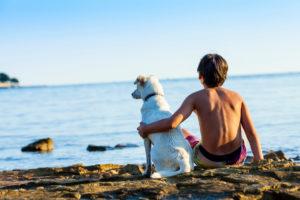 Friendship, dog, child, boy, sea, beach, sit