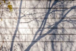 Schattenspiel an einer Wand im Herbst, Baum, Schatten, Gebäude