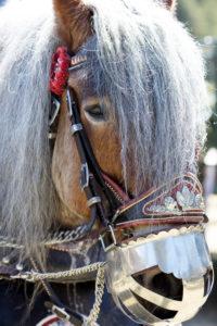 Festively decorated horse, Georgi ride, Mittenwald, Bavaria, Upper Bavaria, Germany,