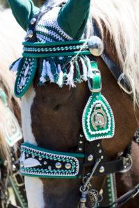 Festlich geschmücktes Pferd, Georgiritt, Mittenwald, Bayern, Oberbayern, Deutschland,