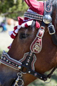 Festively decorated horse, Georgi ride, Mittenwald, Bavaria, Upper Bavaria, Germany,