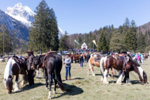 Georgi ride, rider, at Lautersee, Mittenwald, Bavaria, Upper Bavaria, Germany,