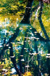 Wasseroberfläche, Fluss, abstrakt, Verläufe, Spiegelung, Reflektion, Herbst,  Laubfärbung, Braunschweig, Niedersachsen, Deutschland, Europa