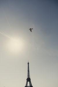 Palais de Chaillot mit Eiffelturm und fliegendem Vogel im Gegenlicht