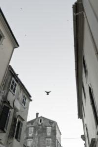 Korfu-Stadt, Stimmung mit fliegendem Vogel