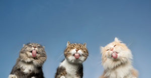 bottom view of three cats licking invisible window glass in front of clear blue sky in the background with copy space