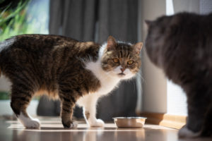 two cats standing next to peet food bowl looking at each other