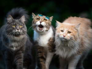 three cats of different colors and breeds standing side by side looking at camera outdoors